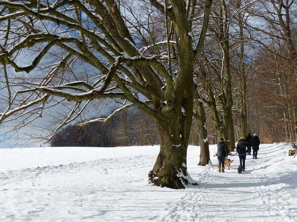ISYbe im Wintertrubel